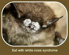 A bat needs sunbeds?