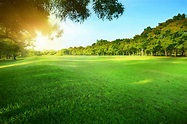 Sunlight and Greenspace